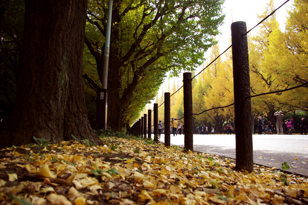 20101121_Jingu.jpg