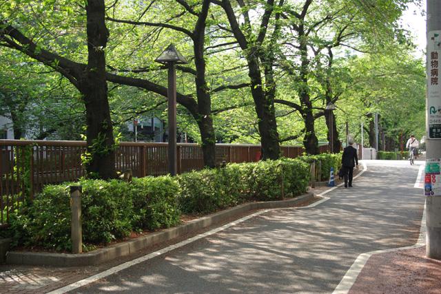 20120424_megurogawa_2.jpg