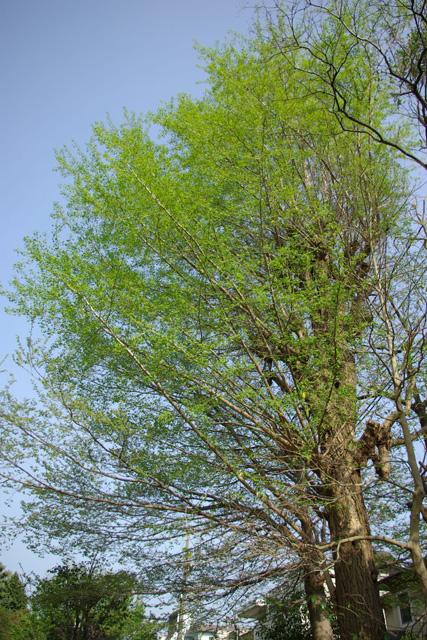20120424_sugekarikoen.jpg