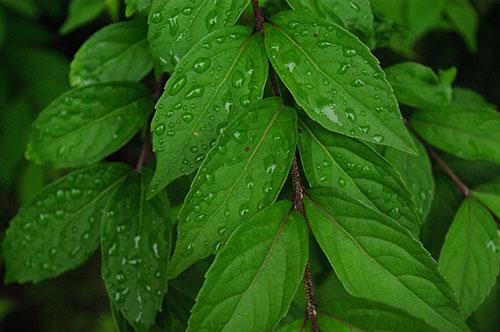 20130530_green.jpg