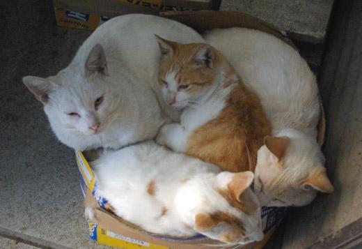 20071020_cat.jpg