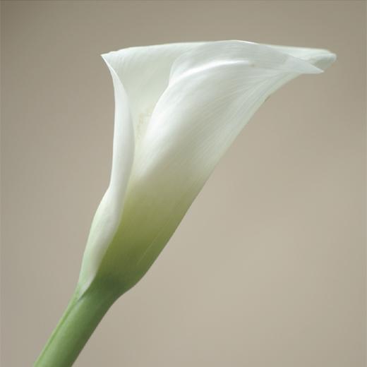 20080412_flower.jpg