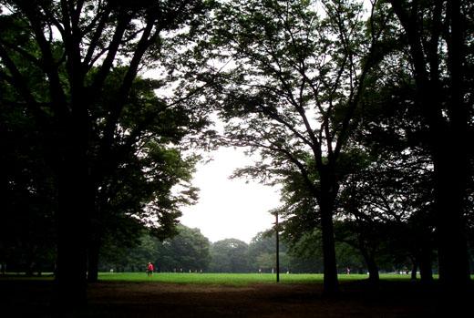 20080721_yoyogikoen_1.jpg