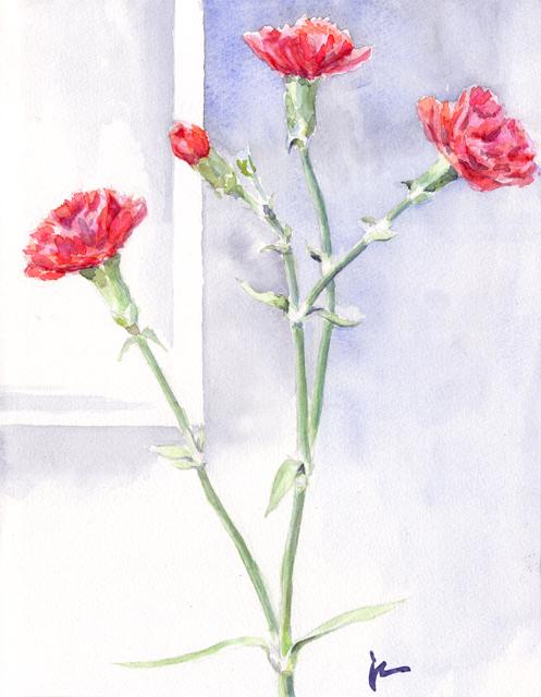 20120215_carnation.jpg