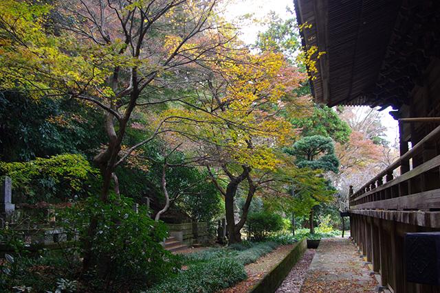 20161215_myohonji_640.jpg